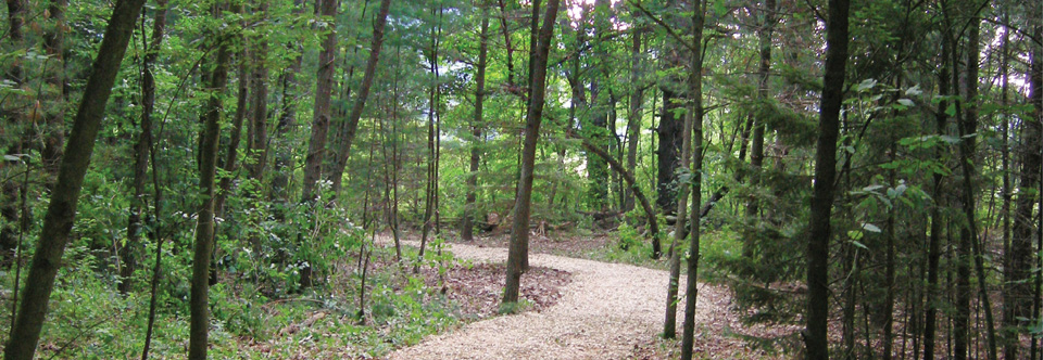 photo of Du Bois home site; forest with path curving to left